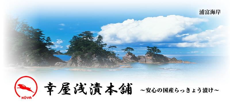 鳥取砂丘らっきょう 販売・ネット通販 幸屋浅漬本舗