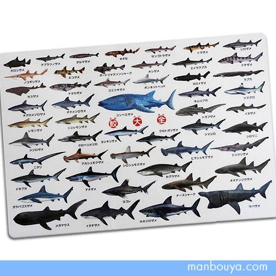 【A4サイズ下敷き】サメグッズ◆おもしろ文房具◆鮫の図鑑◆鮫大全したじき