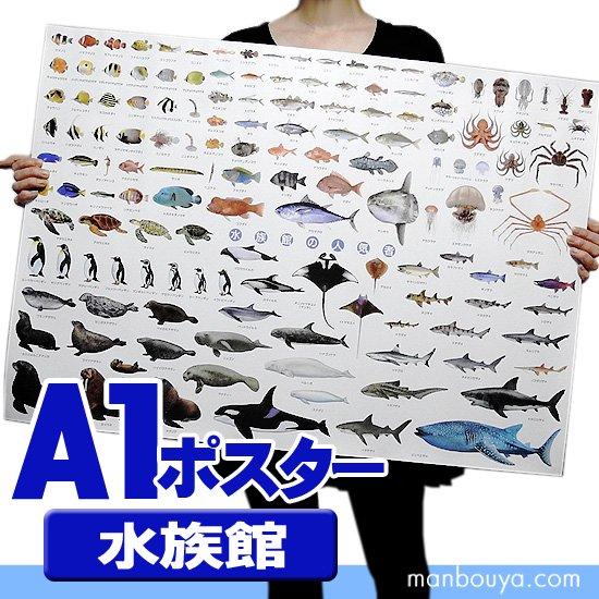 水族館グッズ アートポスター インテリア 特大 A1サイズ 図鑑タイプポスター 水族館の人気者