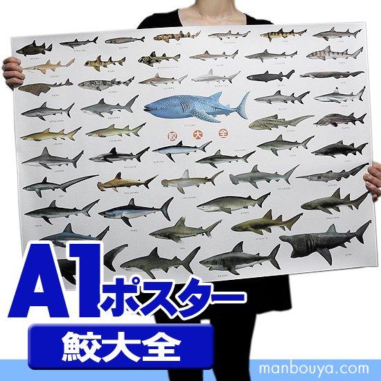 サメグッズ アートポスター インテリア 特大 A1サイズ 図鑑タイプポスター 鮫大全