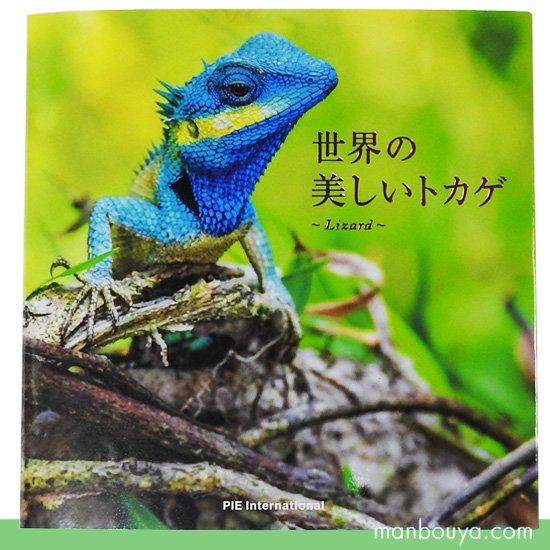 トカゲ 爬虫類 図鑑 写真集 本 パイインターナショナル 世界の美しいトカゲ フルカラー 192ページ