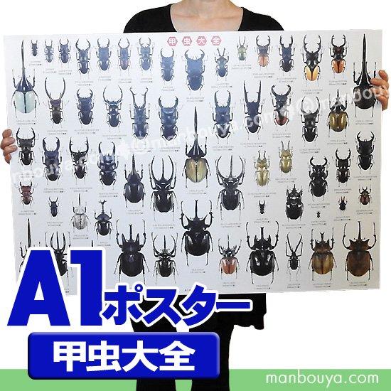 昆虫 グッズ アートポスター インテリア 特大 A1サイズ 図鑑タイプ 実物大 甲虫大全 ポスター