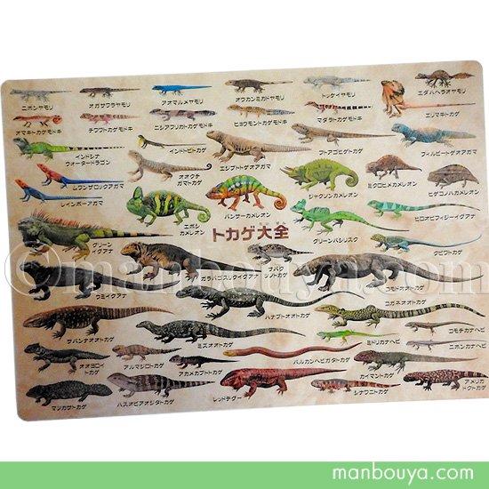 A4サイズ 下敷き トカゲ 爬虫類 図鑑 文房具 ザ・アクセス トカゲ大全 したじき