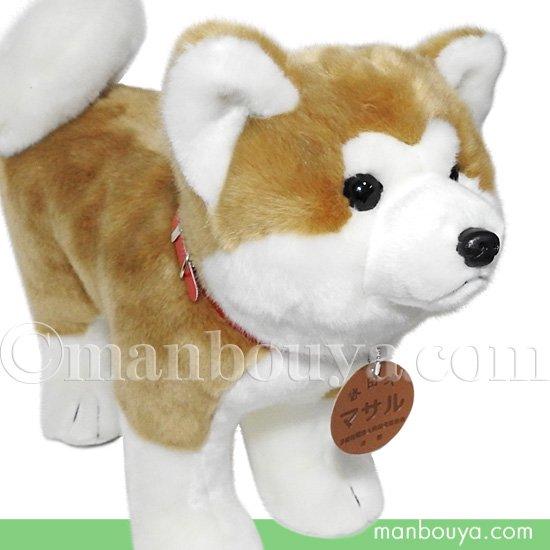 秋田犬 マサル ぬいぐるみ キュート販売 CUTE あきたいぬ 立ちポーズ Lサイズ 50cm