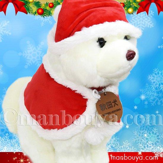 秋田犬 ぬいぐるみ クリスマス キュート販売 CUTE あきたいぬ 白毛 L 37cm サンタ帽子