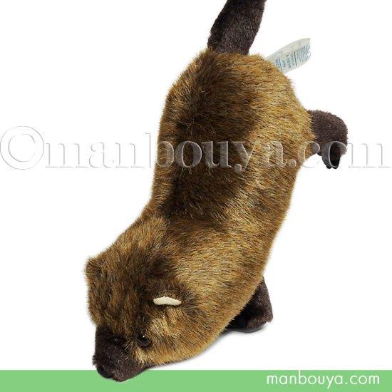 ヤブイヌ ぬいぐるみ ブッシュドッグ 動物園 A-SHOW やぶいぬN 逆立ち 20cm