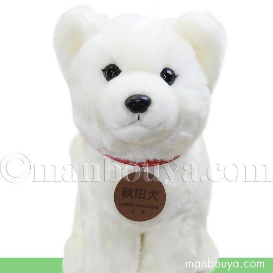 秋田犬 ぬいぐるみ 白毛 保存会 キュート販売 CUTE 座り ホワイト 黒鼻 Lサイズ 37cm