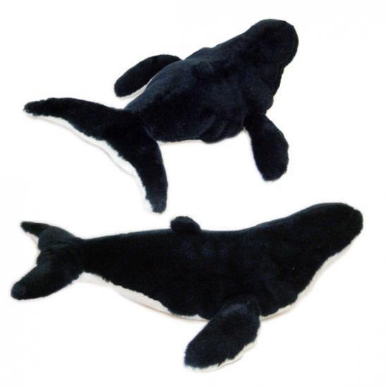 ザトウクジラの画像 p1_3