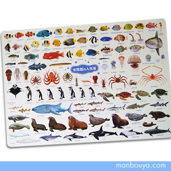 【A4サイズ下敷き】魚・サメ・ペンギン・イルカ・シャチなど◆図鑑したじき◆水族館の人気者
