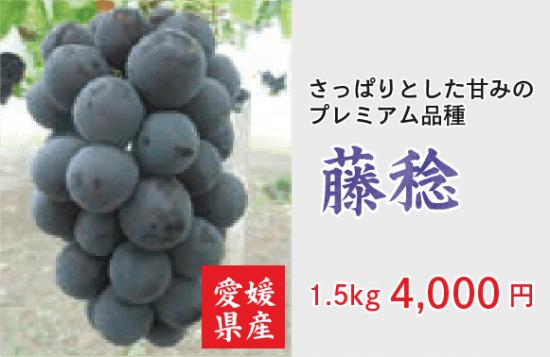 地元特産ぶどう 藤稔 1.5� 【クール代込】