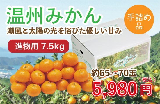 温州みかん【進物用手詰め品】7.5kg 約65~70玉