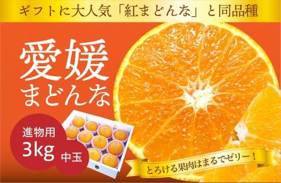 愛媛まどんな【進物用・化粧箱入】約3kg 中玉