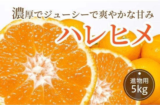 ハレヒメ 5kg 【進物用】