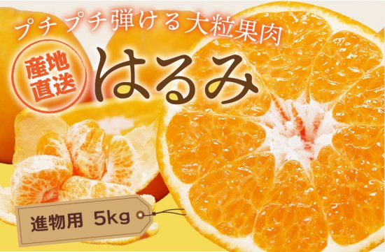 はるみ 【進物用】5kg