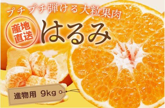 はるみ 【進物用】10kg