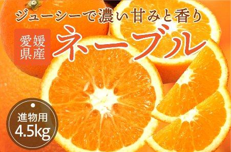 ネーブル 【進物用】5kg
