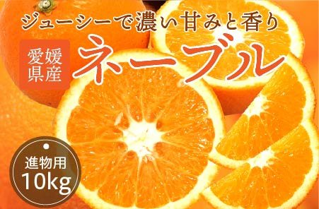 ネーブル 【進物用】10kg