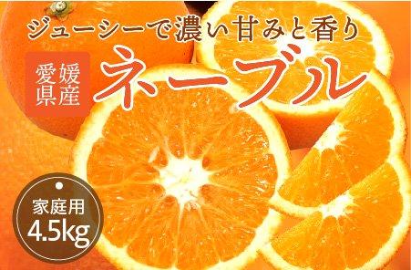 ネーブル 【家庭用】5kg