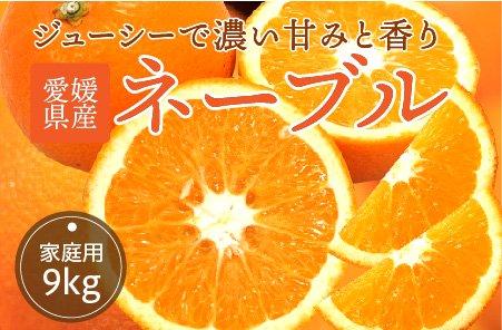 ネーブル 【家庭用】10kg