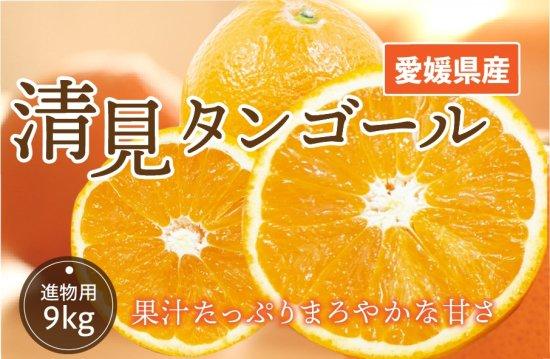 清見タンゴール【進物用】10kg