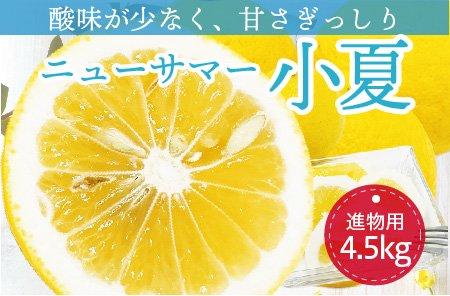ニューサマー小夏【進物用】5kg