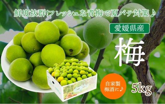 愛媛県産 梅 5kg