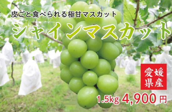 地元特産ぶどう シャインマスカット 1.5�【クール代込】