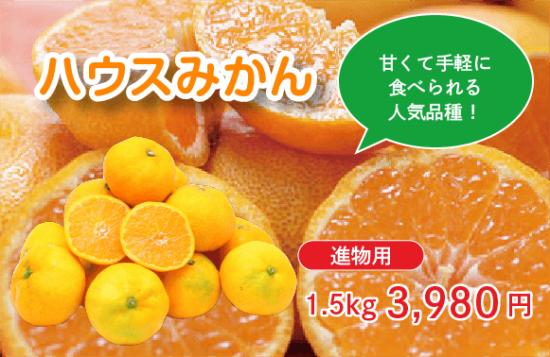 ハウスみかん【進物用】 1.5� 約15〜20玉