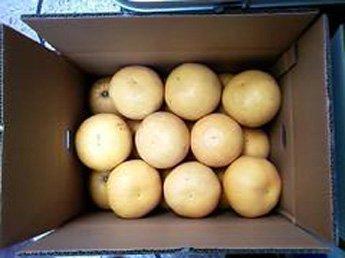 【送料無料】河内晩柑優品 8kg