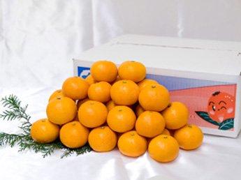 【全国送料無料】温州みかん 2S 10kg箱