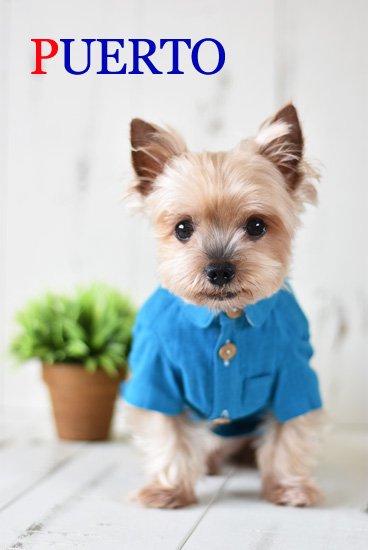 オーシャンブルー半袖麻シャツ