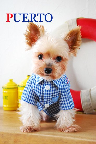 半袖ブルー刺繍シャツ