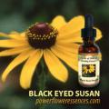 ●ブラックアイドスーザン (Black Eyed Susan)15ml