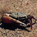 <img class='new_mark_img1' src='https://img.shop-pro.jp/img/new/icons14.gif' style='border:none;display:inline;margin:0px;padding:0px;width:auto;' />◆3 カニ  Crab  15ml
