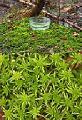 ナルニア スファグナム モス Narnia Sphagnum Moss 30ml