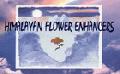 ヒマラヤン・フラワー・エンハンサーズ全56本キット