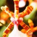 ■カラーオーキッド Color Orchid15ml