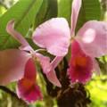 ■インスピレーションオーキッド Inspiration Orchid15ml