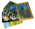 ●ヒーリングハーブ フラワーカード(40枚入)