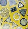 ■ダイアトーム Diatoms(kit5) 7,5ml