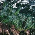 ■サーフグラス Surfgrass(kit4) 7,5ml