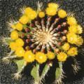 ■セルフエスティームカクタス Self Esteem Cactus(PHIエッセンス)15ml