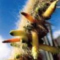 ■4 インナークレンジングカクタス Inner Cleansing Cactus(PHIエッセンス)15ml