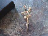 花束のワイヤー編みブローチ2020(ゴールド)*feltricot