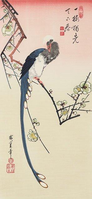 梅に三光鳥