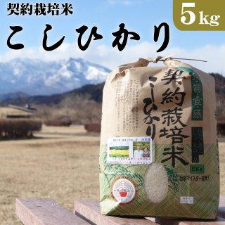 大田原市湯津上産 契約栽培米コシヒカリ 5kg_画像