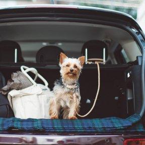 The Great Britain Dog Festival 2019 参加申し込みページ※先行申込み特典あり