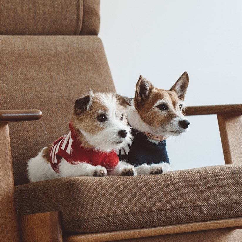 Jack Russell Terrier Festival 2019 この秋に百頭(予定)が集まる ...