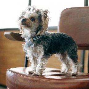 freestitch × Dog yell (9月7日) 第209回チャリティ撮影会※パピー特別枠ご予約ページ※