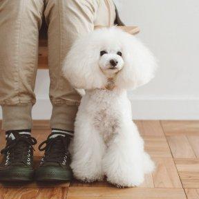 freestitch × Dog yell  (9月7日) 第209回チャリティ撮影会※アンバサダー専用ページ※